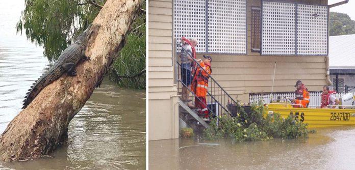 آسٹریلیا: سیلاب میں پھنسے شہریوں کو کشتی کی مدد سے نکالا جارہا ہے' مگرمچھ نے درخت کے تنے پر پناہ لے رکھی ہے
