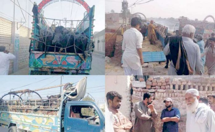 حیدرآباد، بلدیہ میٹ سیکشن کاعملہ انچارج شاہد قریشی کی سرکردگی میں مختلف علاقوں میں قائم بھینسوں کے غیرقانونی باڑوں کے خلاف کارروائی کررہے ہیں