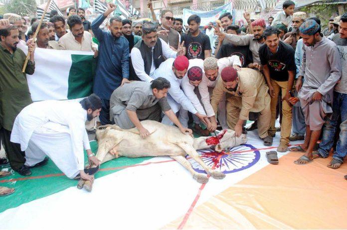 حیدرآباد،سنی تحریک کے مظاہرے میں بھارتی پرچم پر گائے ذبح کرکے انکوکھا احتجاج کیاجارہاہے