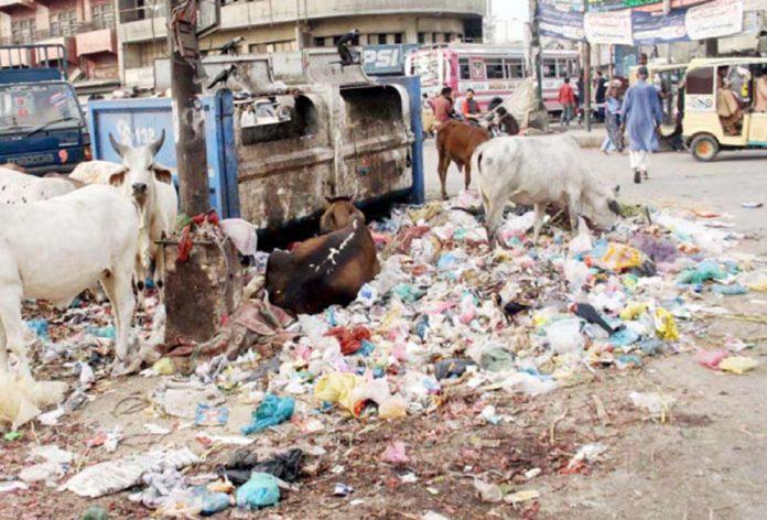 یہ مویشی منڈی نہیںلی مارکیٹ کامصروف علاقہ ہے، انتظامیہ کی نااہلی کے باعث چوک کچراکنڈی بناہواہے