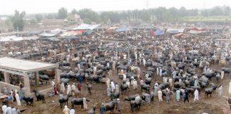 پشاورمنڈی کا فضائی منظر جہاں جانوروں بہت نظر آرہے ہیں مگر خریدار نہ ہونے کے برابر ہیں