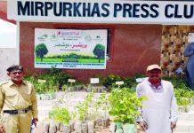 میرپورخاص،محکمہ جنگلات کی جانب سے پریس کلب پر شجرکاری مہم کے سلسلے میں شہریوں میں پودے تقسیم کیے جارہے ہیں