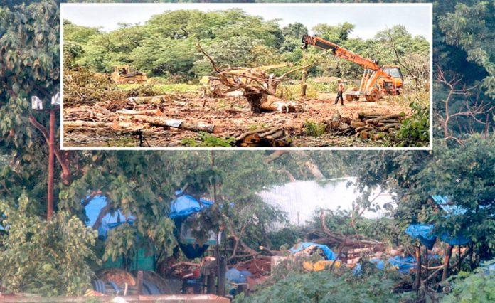 مہاراشٹر: ریاستی حکومت کی سرپرستی میں جنگلات کا صفایا کیا جارہا ہے (فائل فوٹو)