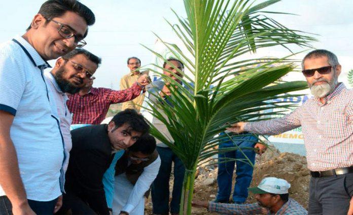 صدر کاٹی شیخ عمر ریحان اور ڈی سی کورنگی شہریار میمن شجر کاری مہم میں پودا لگا رہے ہیں